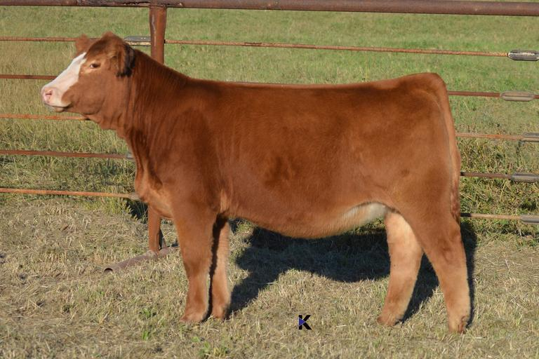 K-LER Cattle