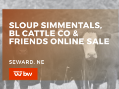 Sloup Simmentals, BL Cattle Co and Friends Online Sale - Nebraska