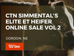 CTN Simmental's Elite ET Heifer Online Sale Vol 2 - Nebraska