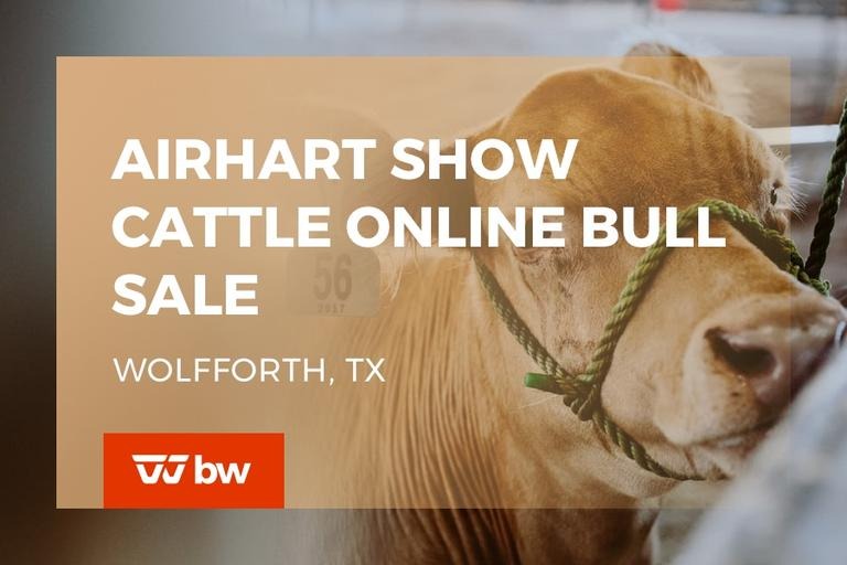 Airhart Show Cattle Online Bull Sale - Texas