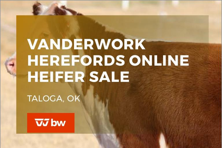Vanderwork Herefords Online Heifer Sale - Oklahoma