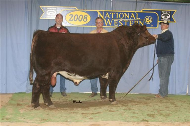 Bollum Family Shorthorns -  JSF Top Hand 34R