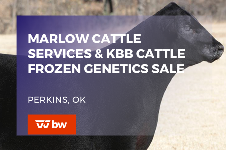 Marlow Cattle Services and KBB Cattle Frozen Genetics Sale - Oklahoma