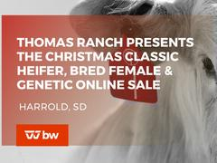 The Christmas Classic Heifer, Bred Female and Genetic Online Sale - South Dakota