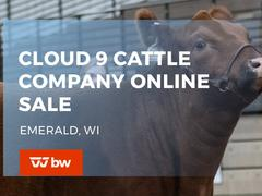 Cloud 9 Cattle Company Online Sale - Wisconsin