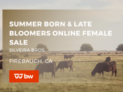 Summer Born and Late Bloomers Online Female Sale - California