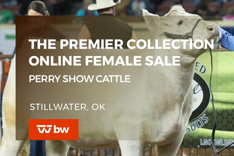 The Premier Collection Online Female Sale - Oklahoma