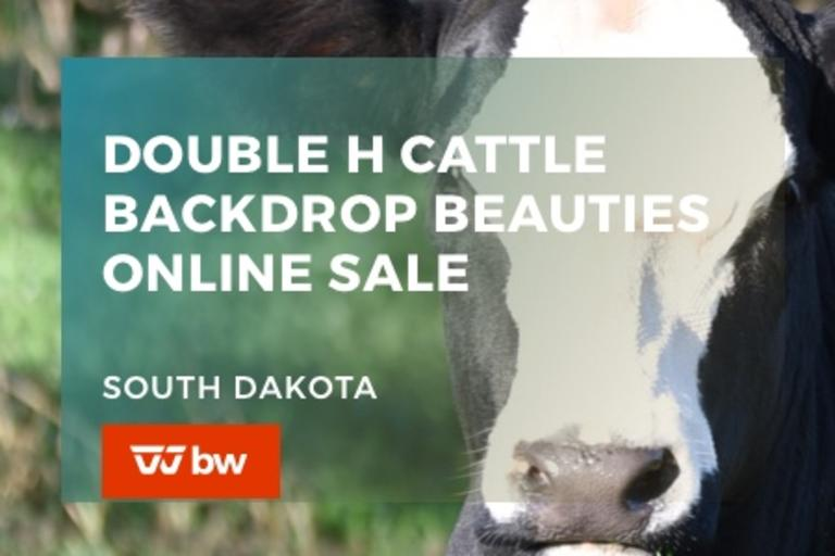 Double H Cattle Backdrop Beauties Online Sale - South Dakota