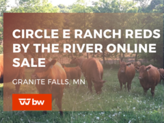 Circle E Ranch Reds by the River Online Sale - Minnesota