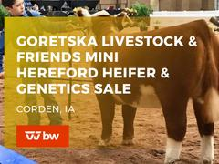 Goretska Livestock and Friends Mini Hereford Heifer and Genetics Online Sale - Iowa