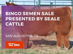 Bingo Semen Sale Presented by Seale Cattle- Texas