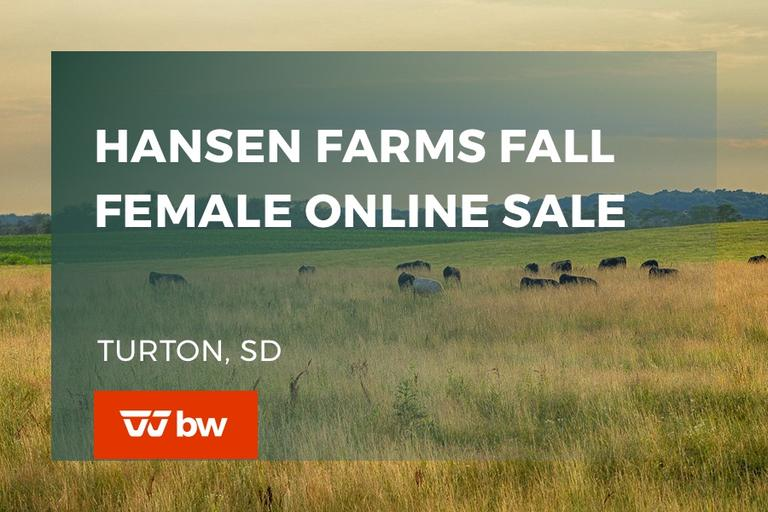 Hansen Farms Fall Female Online Sale - South Dakota