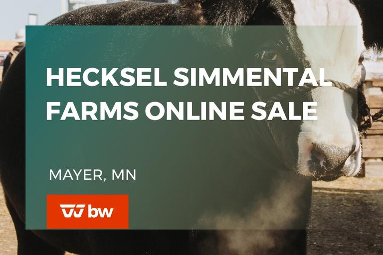 Hecksel Simmental Farms Online Sale - Minnesota