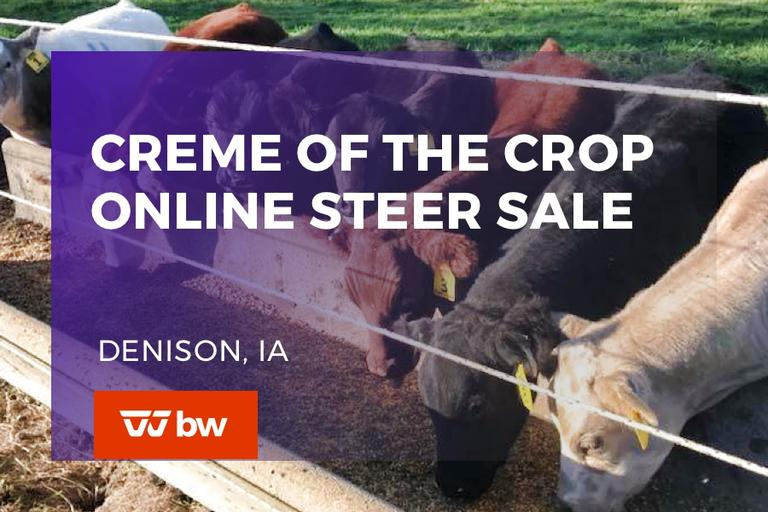 Creme of the Crop Online Steer Sale - Iowa