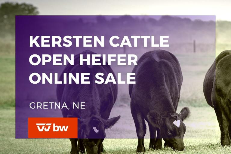 Kersten Cattle Open Heifer Online Sale - Nebraska