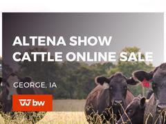 Altena Show Cattle Online Sale - Iowa