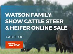 Watson Family Show Cattle Steer and Heifer Online Sale - Ohio