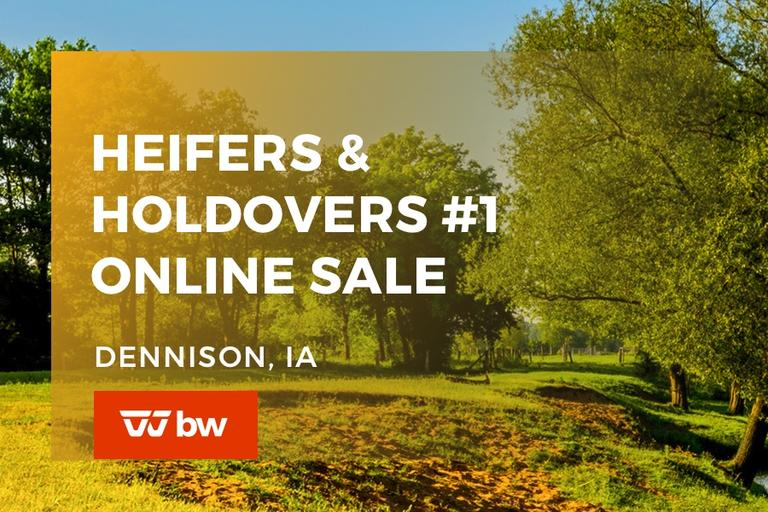 Heifers and Holdovers Online Sale #1 - Iowa