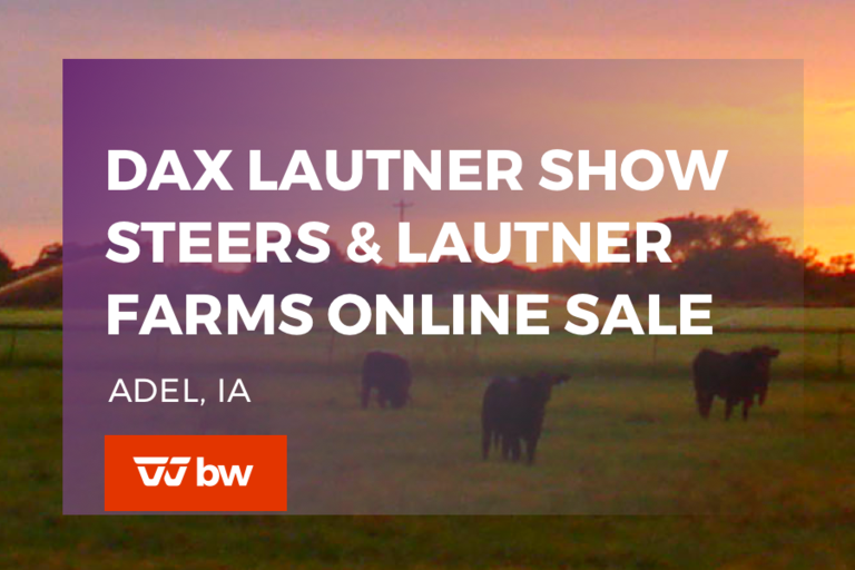 Dax Lautner Show Steers & Lautner Farms Online Sale - Iowa