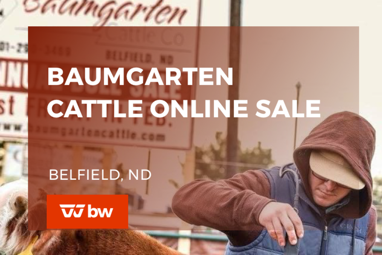 Baumgarten Cattle Online Sale - North Dakota