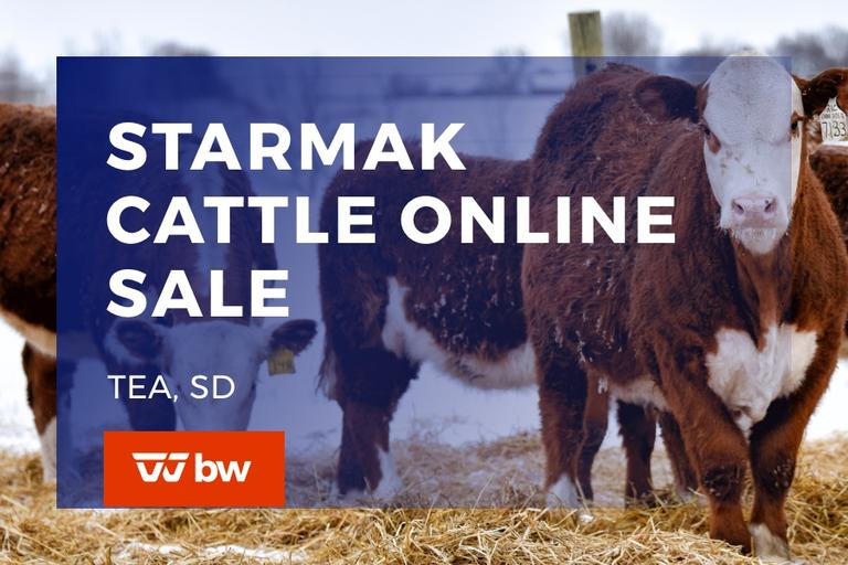 Starmak Cattle Online Sale - South Dakota