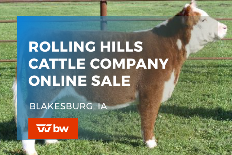 Rolling Hills Cattle Company Online Sale - Iowa