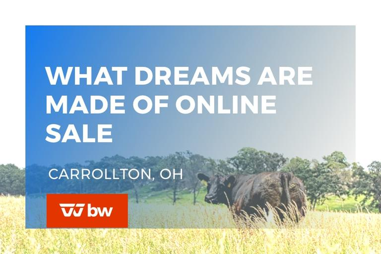 What Dreams Are Made Of Online Sale - Ohio