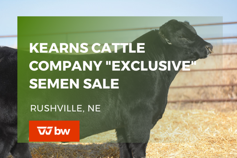 "Kearns Cattle Company ""Exclusive"" Semen Sale - Nebraska"