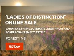 """Ladies of Distinction"" Online Sale - Mississippi"