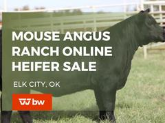 Mouse Angus Ranch Online Heifer Sale - Oklahoma