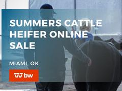 Summers Cattle Heifer Online Sale - Oklahoma