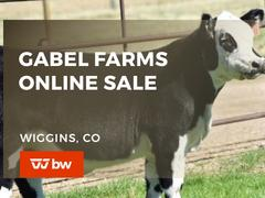 Gabel Farms Online Sale - Colorado