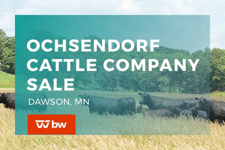Ochsendorf Cattle Co. - Minnesota