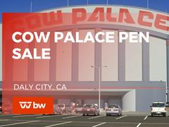Cow Palace Pen Sale - California