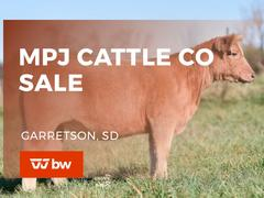 MPJ Cattle Co Online Sale - South Dakota