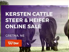 Kersten Cattle Steer & Heifer Online Sale - Nebraska