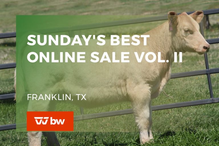 Sunday's Best Online Sale Vol. II - Texas