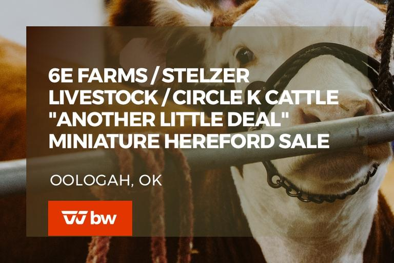 "6E Farms/Stelzer Livestock/Circle K Cattle ""Another Little Deal"" Miniature Hereford Sale - Oklahoma"