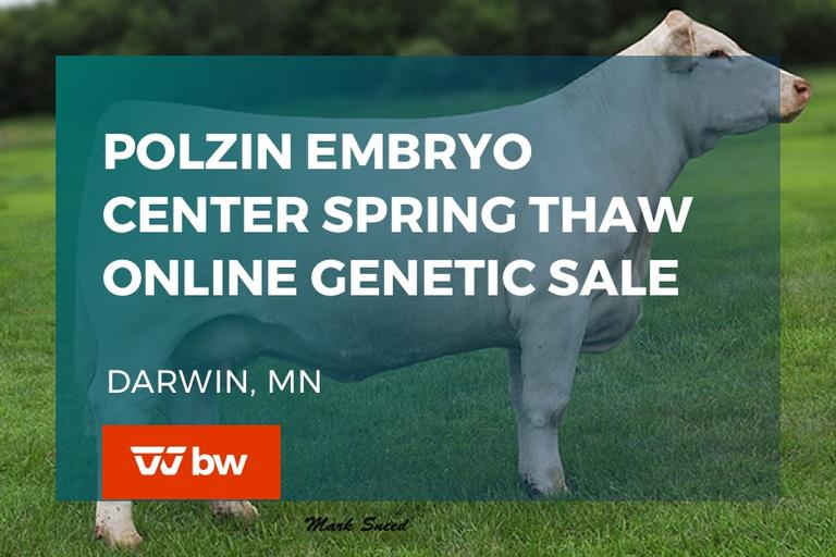 Polzin Embryo Center Spring Thaw Online Genetic Sale - Minnesota