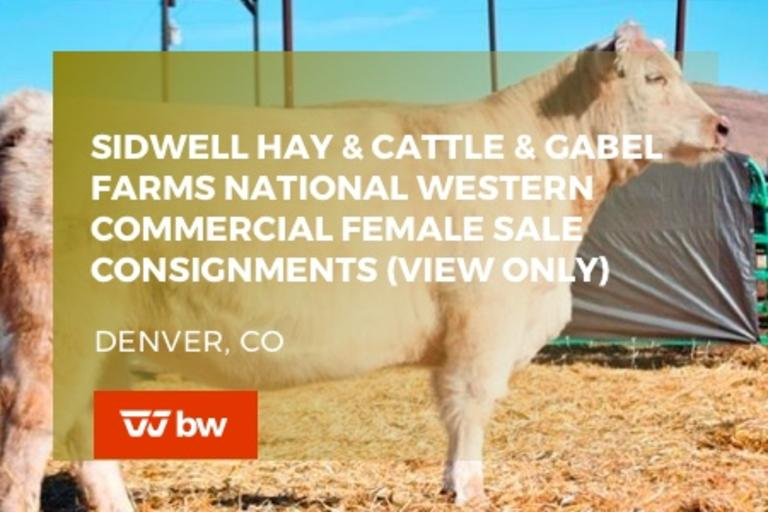 Sidwell Hay and Cattle & Gabel Farms National Western Commercial Female Sale Consignments (VIEW ONLY) - Colorado