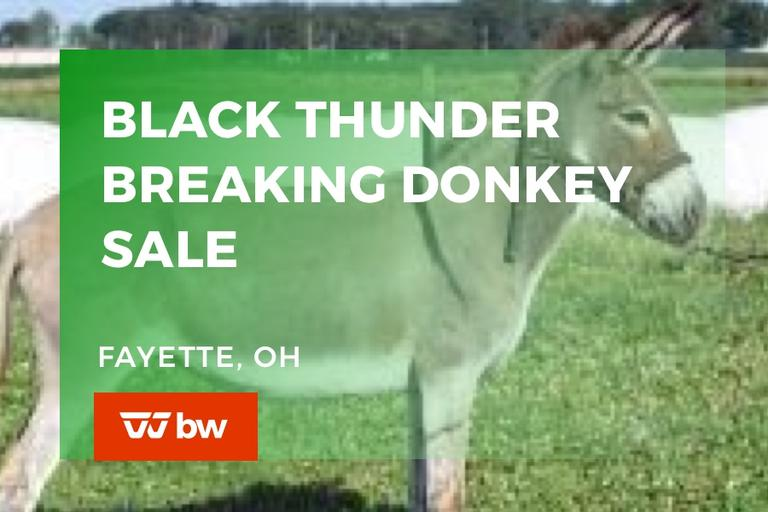 Black Thunder Breaking Donkeys Online Sale - Ohio