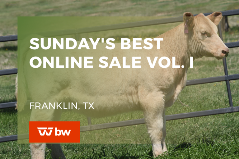Sunday's Best Online Sale Vol. I - Texas