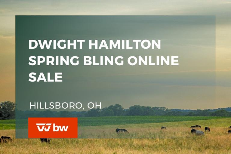 Dwight Hamilton Spring Bling Online Sale - Ohio
