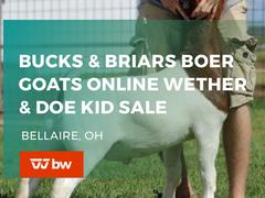 Bucks and Briars Boer Goats Online Wether & Doe Kid Sale - Ohio