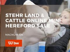 Stehr Land and Cattle Online Mini Hereford Sale - Oklahoma