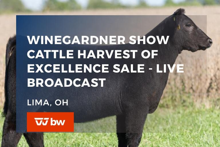 Winegardner Show Cattle Harvest of Excellence Sale - Live Broadcast - Ohio