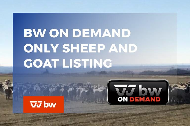 BW On Demand Only Sheep and Goat Listing