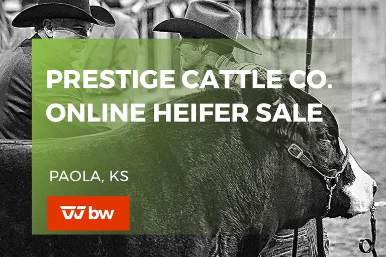 Prestige Cattle Co Online Heifer Sale - Kansas