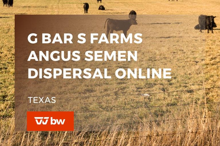 G Bar S Farms Angus Semen Dispersal Online Sale - Texas