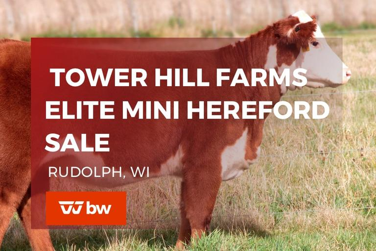 Tower Hill Farms Elite Mini Hereford Sale - WI